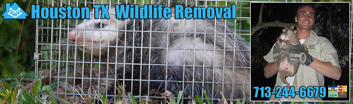 Houston Wildlife and Animal Removal